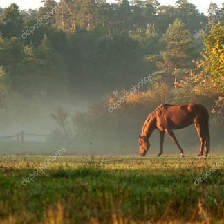 Постер Лошадь на туманном лугу
