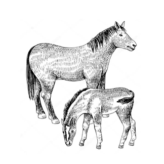 Постер Лошадь с жеребенком