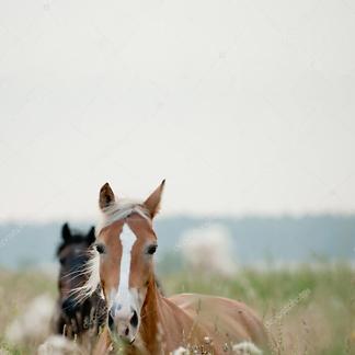 Постер Лошади в поле
