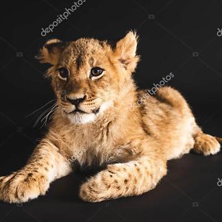 Львенок на черном фоне