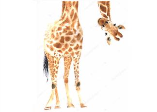 Постер Любопытный жираф  - фото