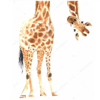 Постер Любопытный жираф