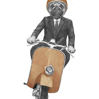 Постер Мопс на мопеде