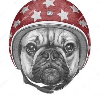 Мопс в шлеме