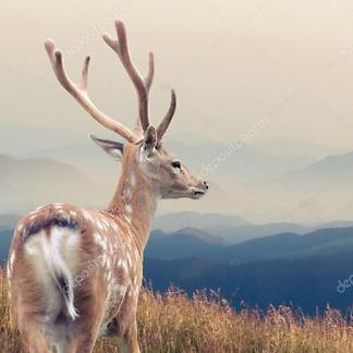 Постер Олень на фоне горы и неба