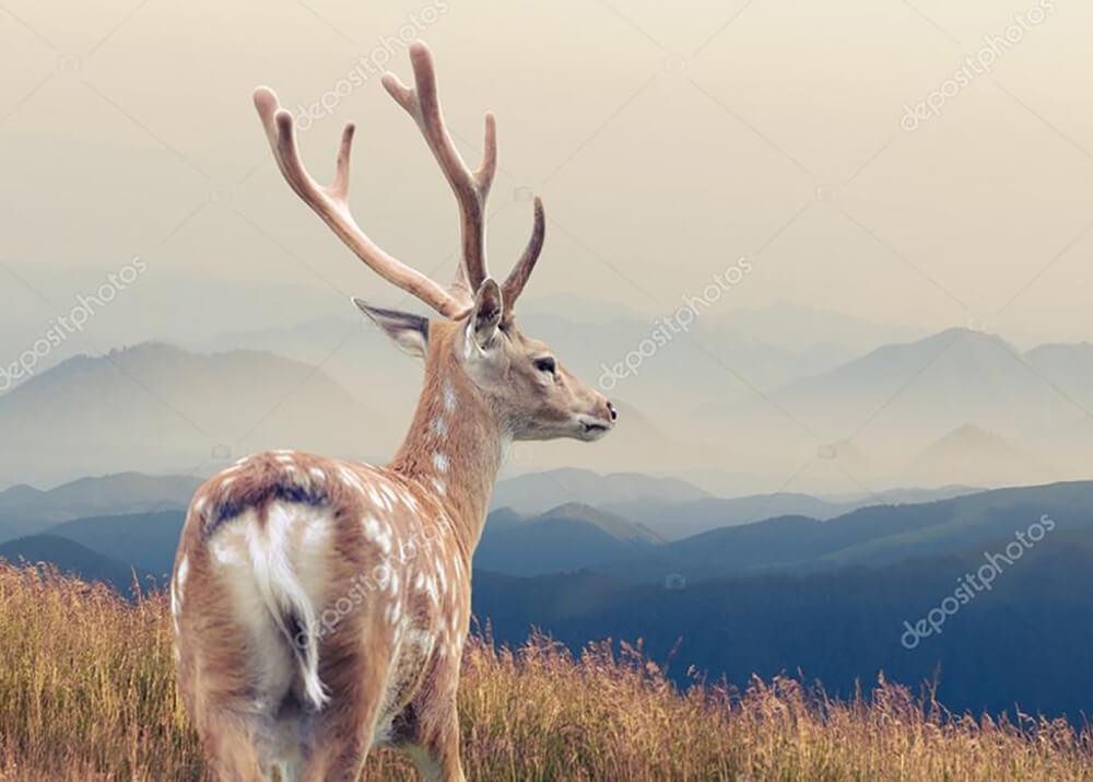Постер Олень на фоне горы и неба  - фото