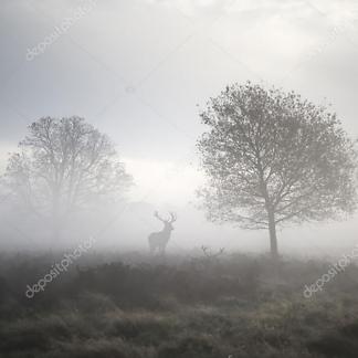 Постер Олень туманным утром