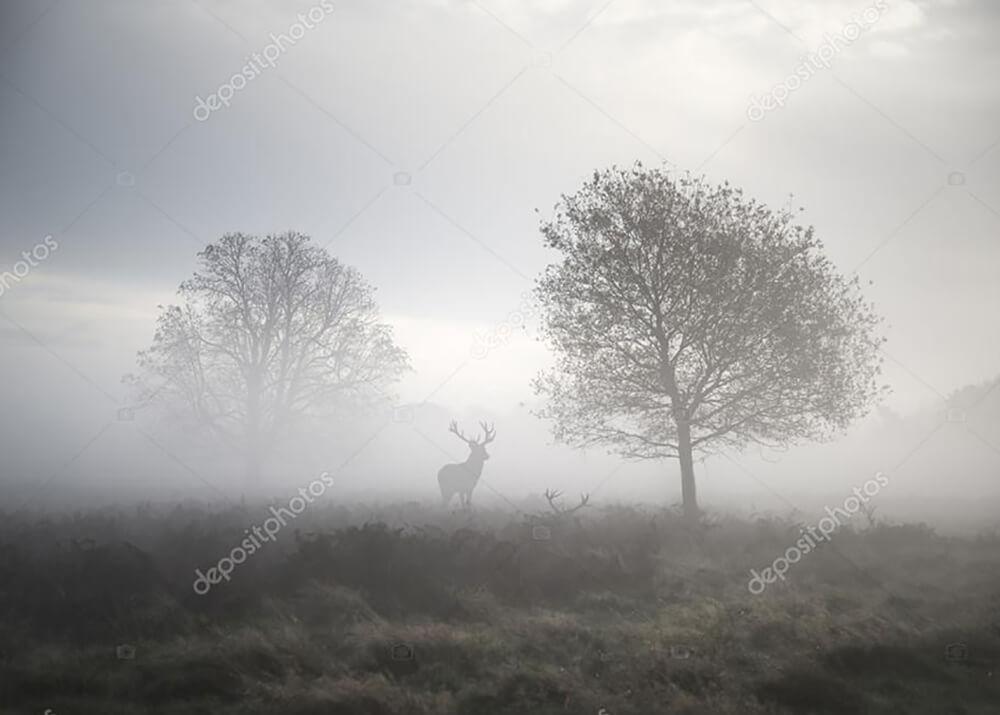 Постер Олень туманным утром  - фото