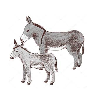 Постер Ослик с жеребенком