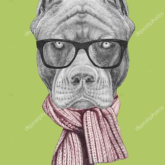 Постер Пибуля в очках