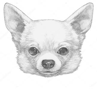 Портрет Чихуахуа