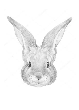 Портрет Кролика  - фото