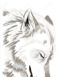 Эскиз волка