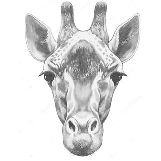 Портрет жирафа