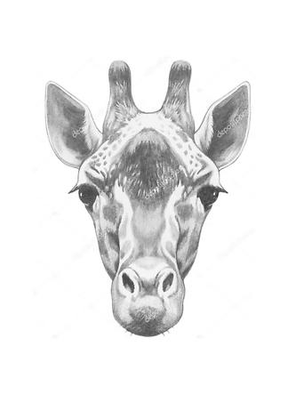 Портрет жирафа  - фото