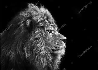 Постер Потрясающий лев  - фото