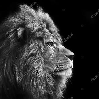 Король Лев Аслан