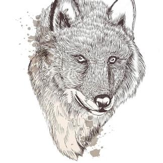 Постер Ручной портрет волка