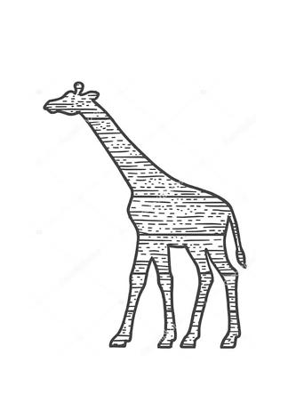 Постер Силуэт жирафа  - фото