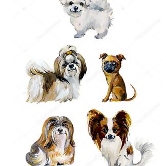 Постер Собачки