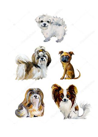 Постер Собачки  - фото