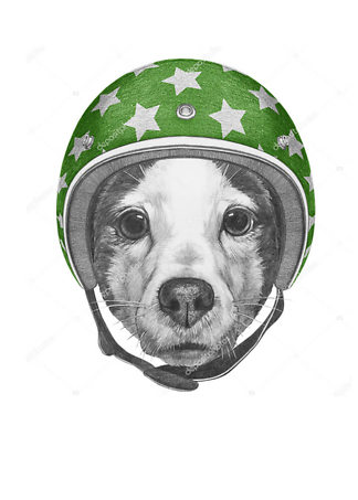 Постер Собака в зеленом шлеме  - фото