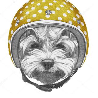 Постер Собака в желтом шлеме