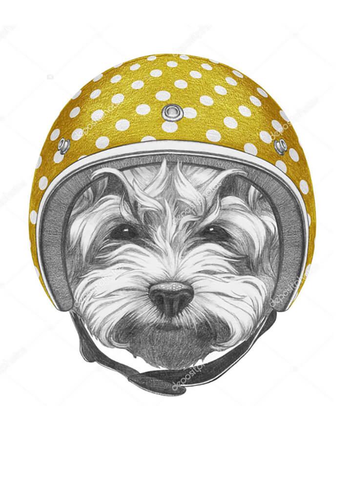 Постер Собака в желтом шлеме  - фото