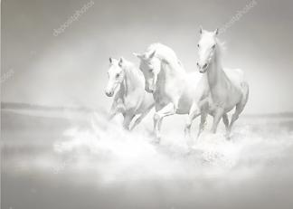 Постер Стадо белых лошадей  - фото