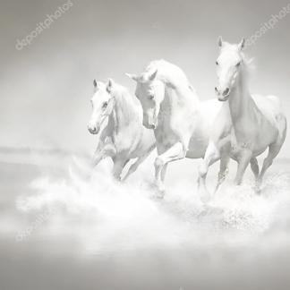 Постер Стадо белых лошадей