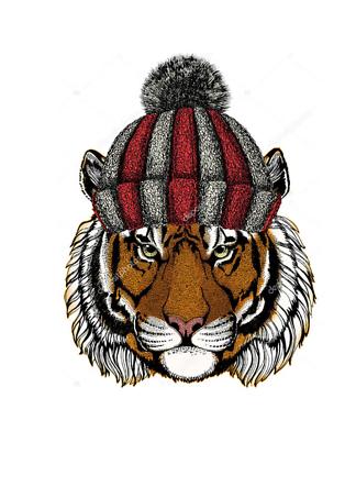 Постер Тигр в шапке  - фото