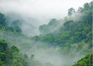 Постер Тропический лес  - фото