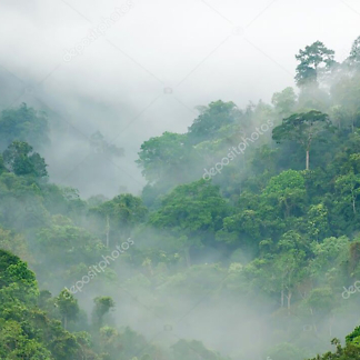 Постер Тропический лес