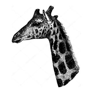 Винтажный портрет жирафа