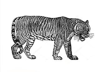 Постер Винтажный тигр  - фото