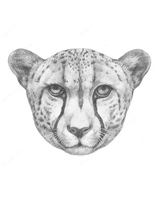 Постер Ягуар  - фото