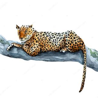 Постер Ягуар лежит на ветке
