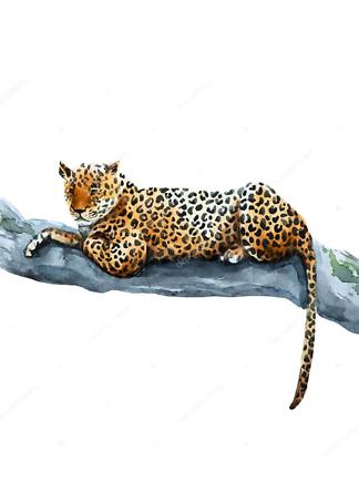 Постер Ягуар лежит на ветке  - фото