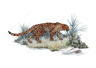 Постер Ягуар на островке  - фото