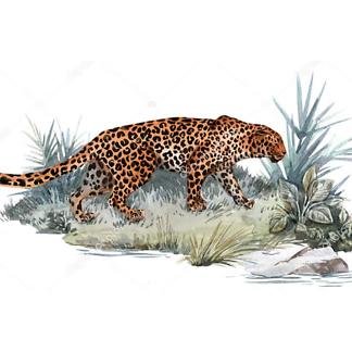Постер Ягуар на островке