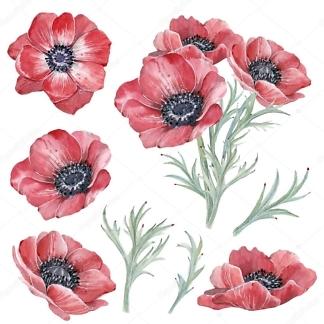 Наклейка цветы Анемоны  - фото
