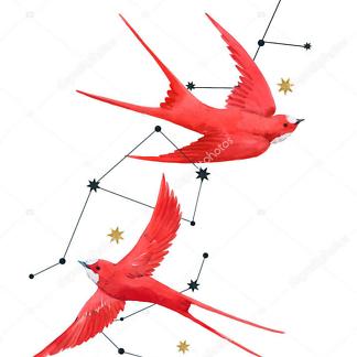 Птицы  - фото