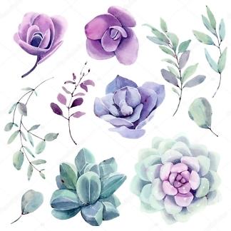 Стикеры цветы Суккуленты  - фото