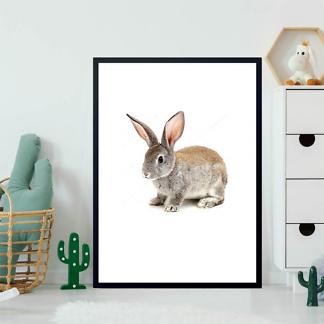 Постер Кролик лопоухий  - фото 2