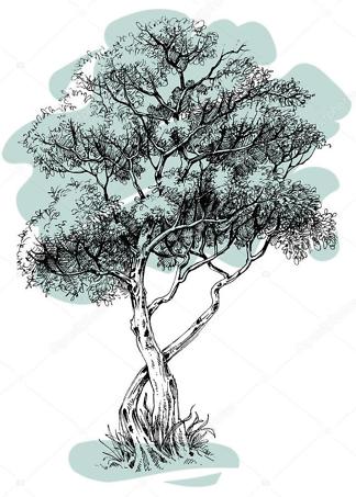 Постер дерево  - фото