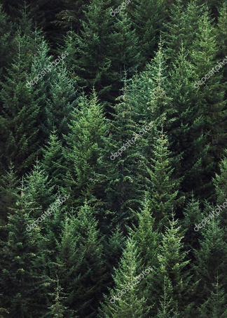 Постер лес  - фото