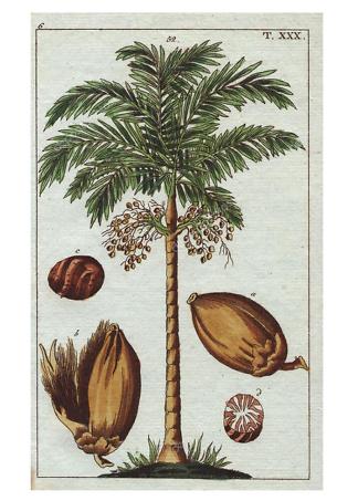 Постер пальма  - фото