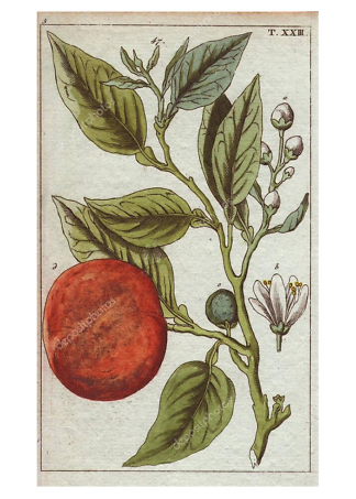 Постер персик  - фото