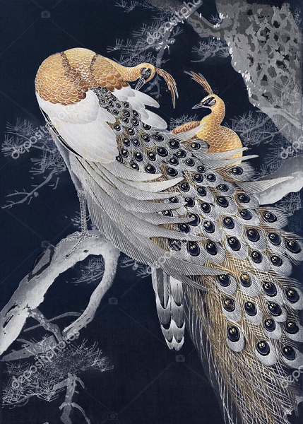 Постер райская птица  - фото