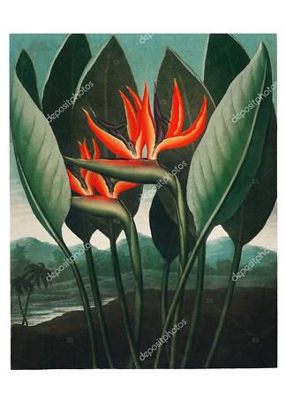 Постер винтажная иллюстрация тропических цветов  - фото